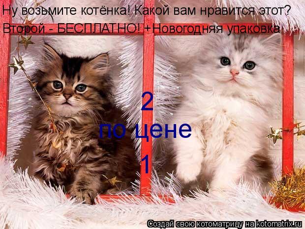Где лучше взять котенка?