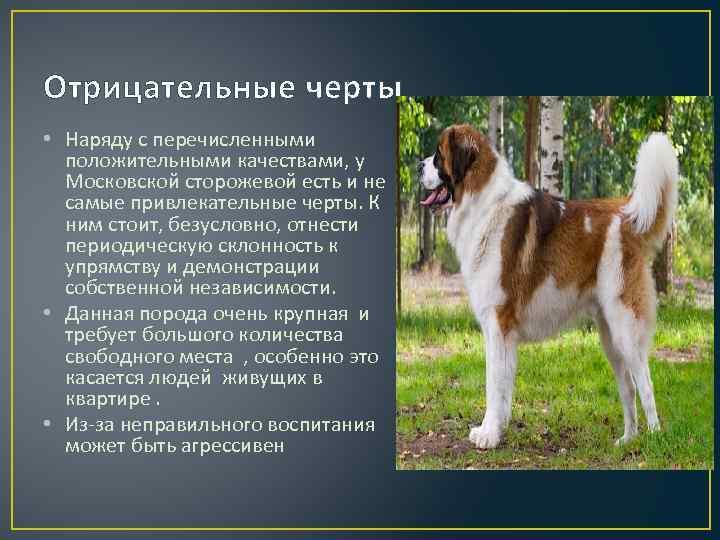 Московская овчарка (сторожевой пес): все о породе