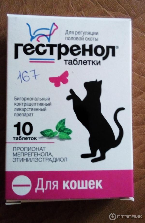 Препарат Гестренол: эффективная регуляция половой охоты у кошек