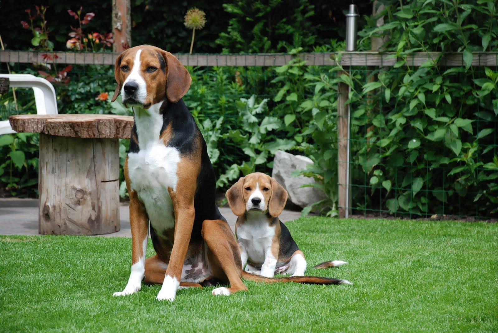 Хорошая компания: кто такие собаки-компаньоны