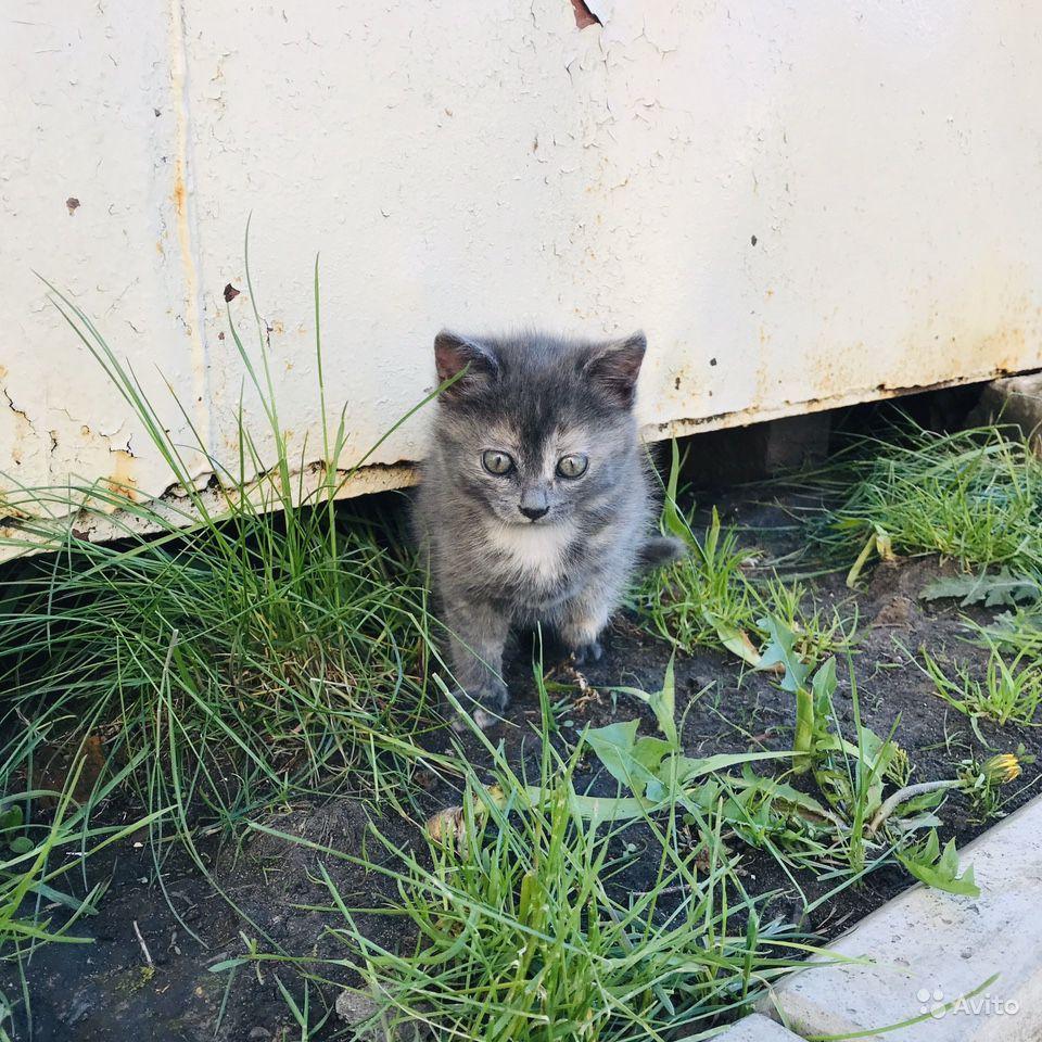 Отдать кошку в приют: куда отдать котят навсегда