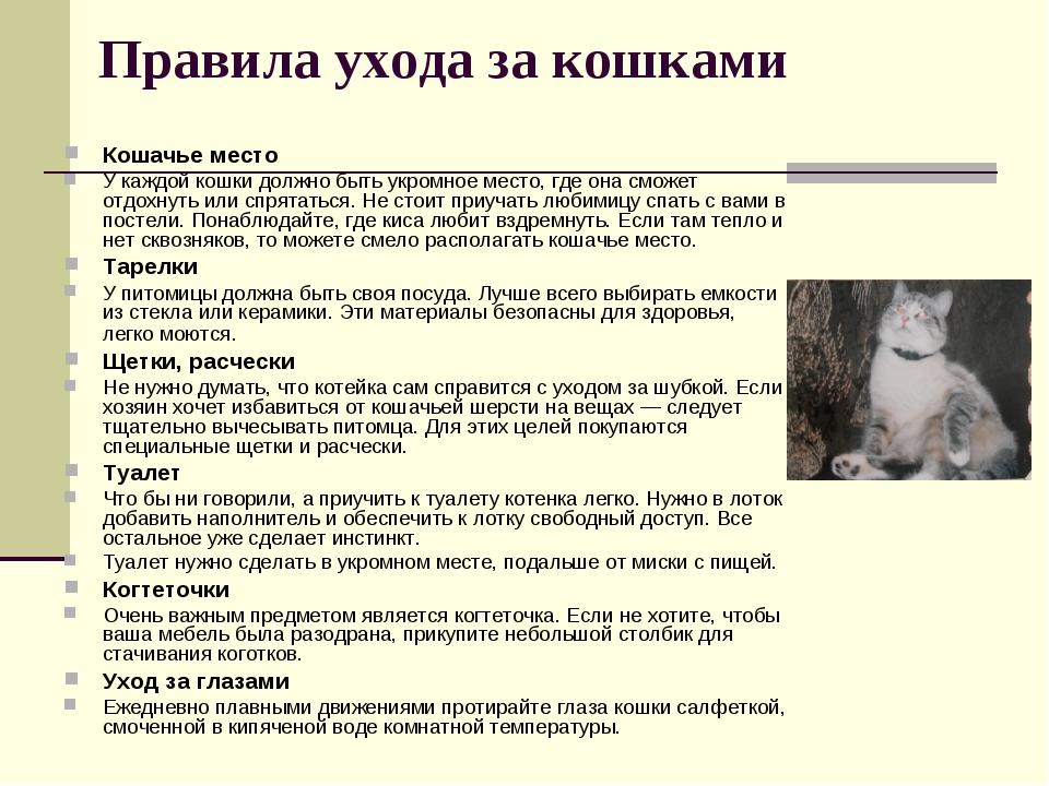 Кошачья старость: что изменить в условиях содержания