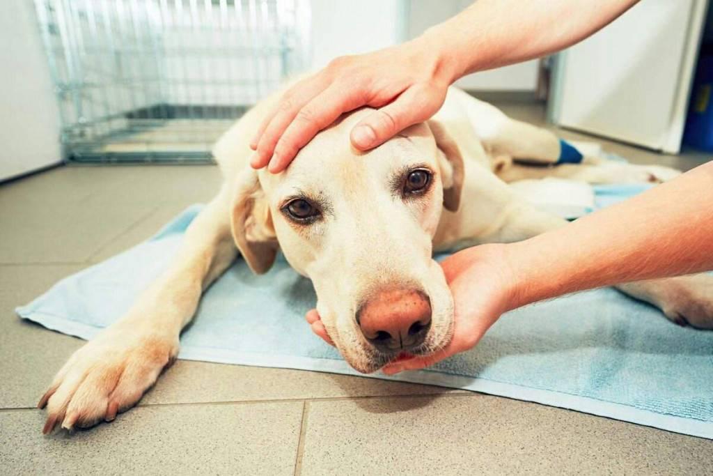 У собаки текут слюни: почему появляется обильное слюноотделение
