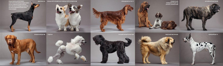 Дворянка или дворняжка: как определить породу собаки?