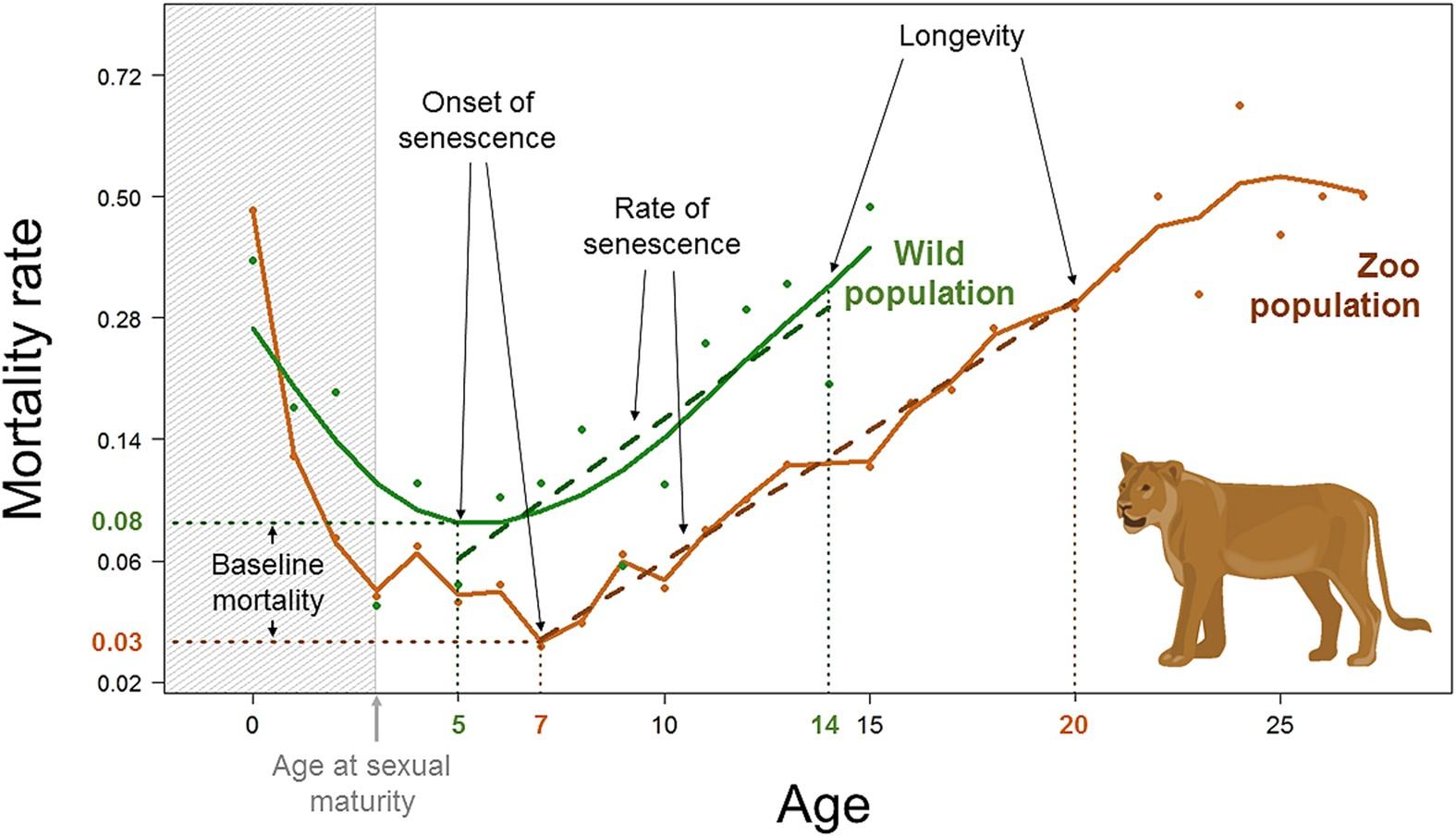 Сколько живут лабрадоры в домашних условиях