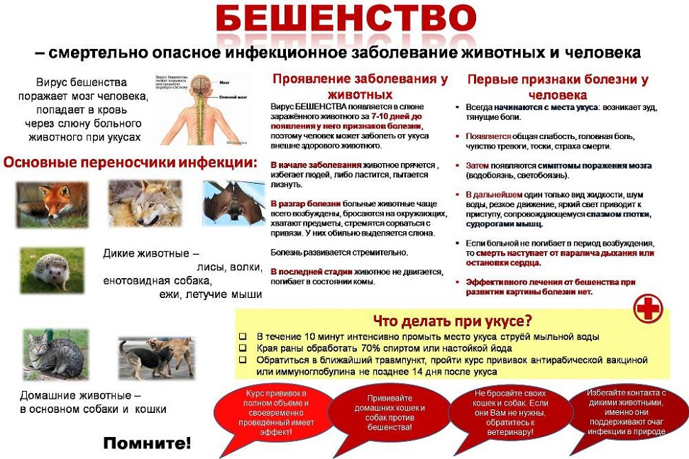 Бешенство у котов: опасность, симптомы и профилактика