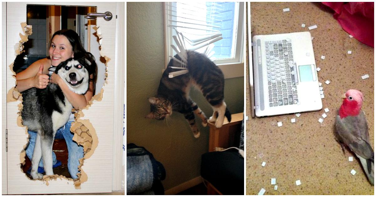 Что делают животные дома в отсутствие хозяина