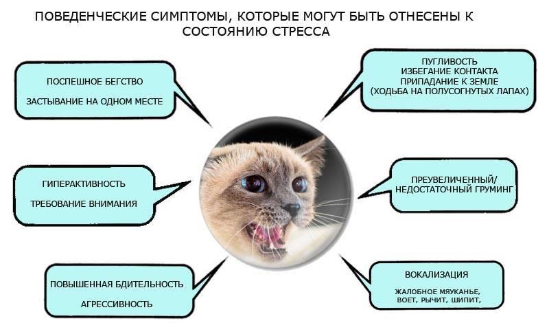 Агрессия у кошек и котов