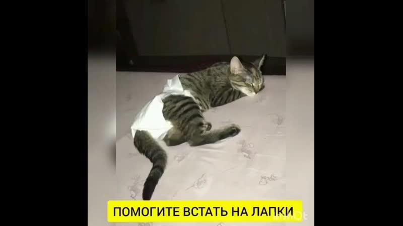 Котенок какает с кровью: причины и лечение