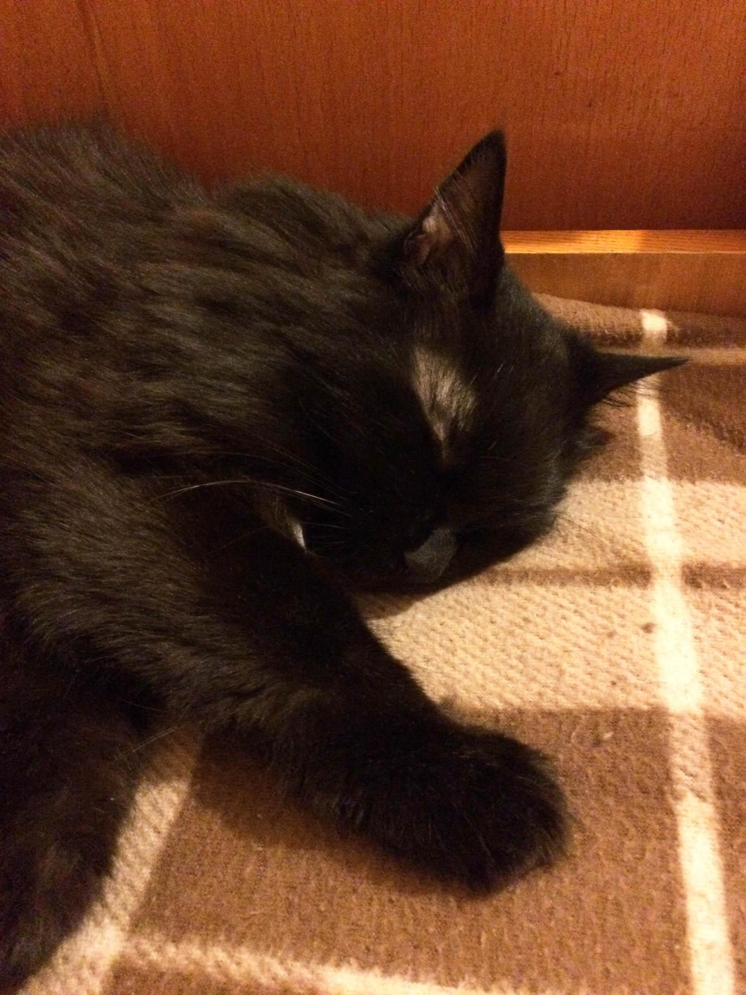 Как похоронить кошку и где правильно это сделать