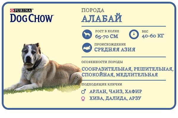 Алабай: вес взрослой собаки и щенка по месяцам