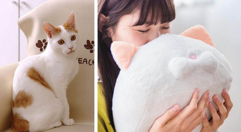 Почему кошки не пахнут?