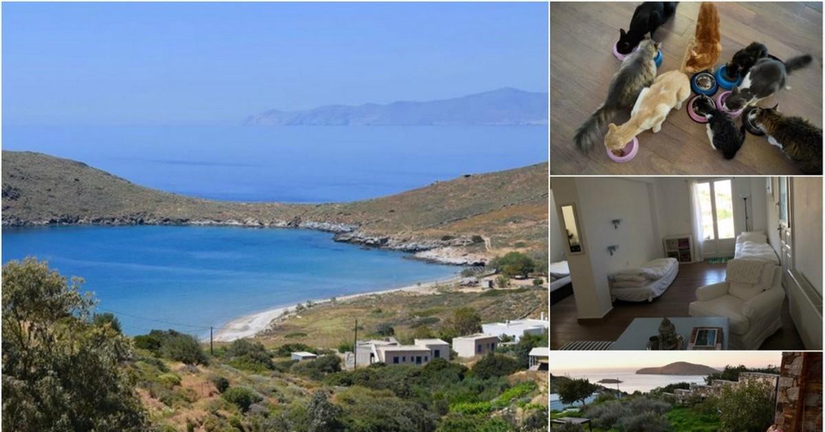 Работа мечты — уход за кошками на греческом острове