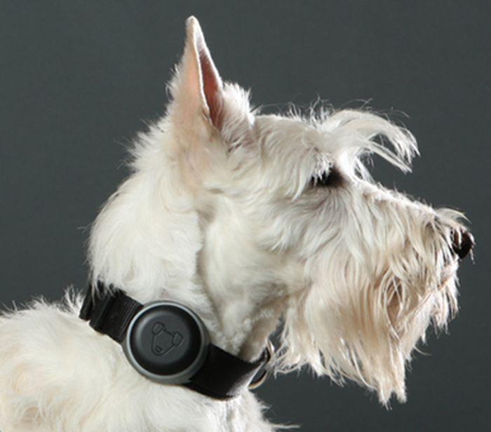 GPS-трекер для собак с маячком-навигатором