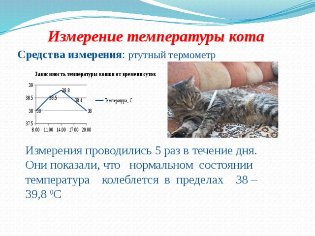 Как измерить температуру кошке в домашних условиях