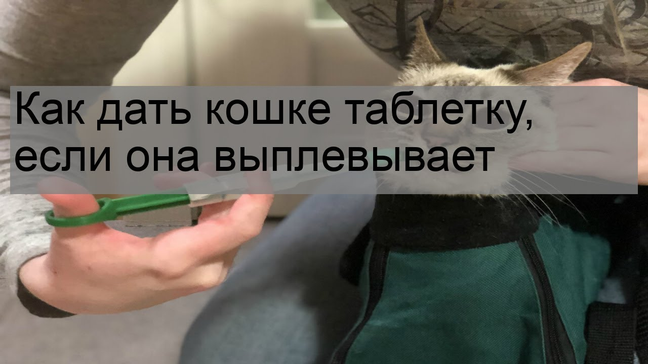 Как дать кошке таблетку, если она выплевывает