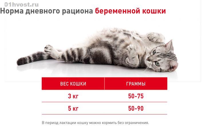 Чем кормить кошку после родов: полноценное питание и уход