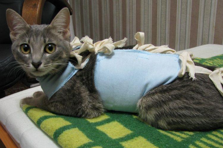 Кошка после стерилизации не ходит в туалет