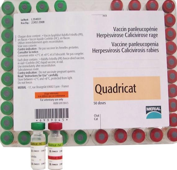 Квадрикат — вакцина для кошек