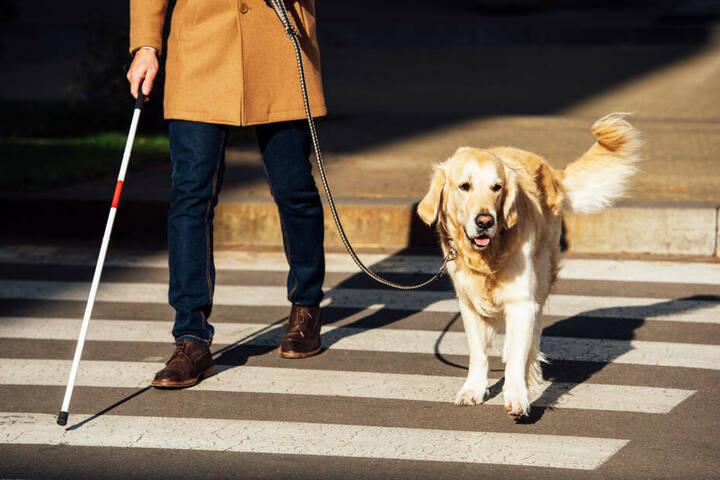 Собака-поводырь для слепых: название породы