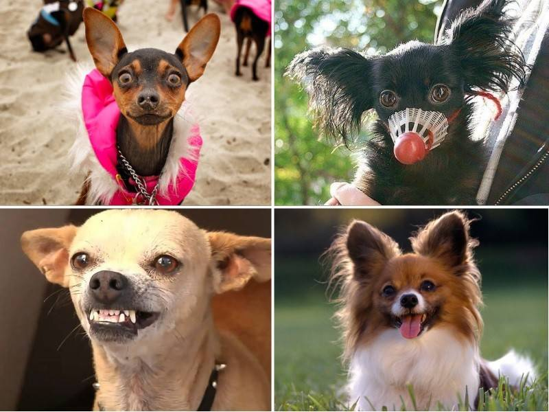 Злая собака: ТОП-10 самых злобных пород в мире