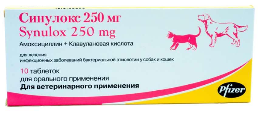 Обзор антибактериального препарата Синулокс