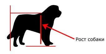 Холка у собаки: где находится и как измерять ее