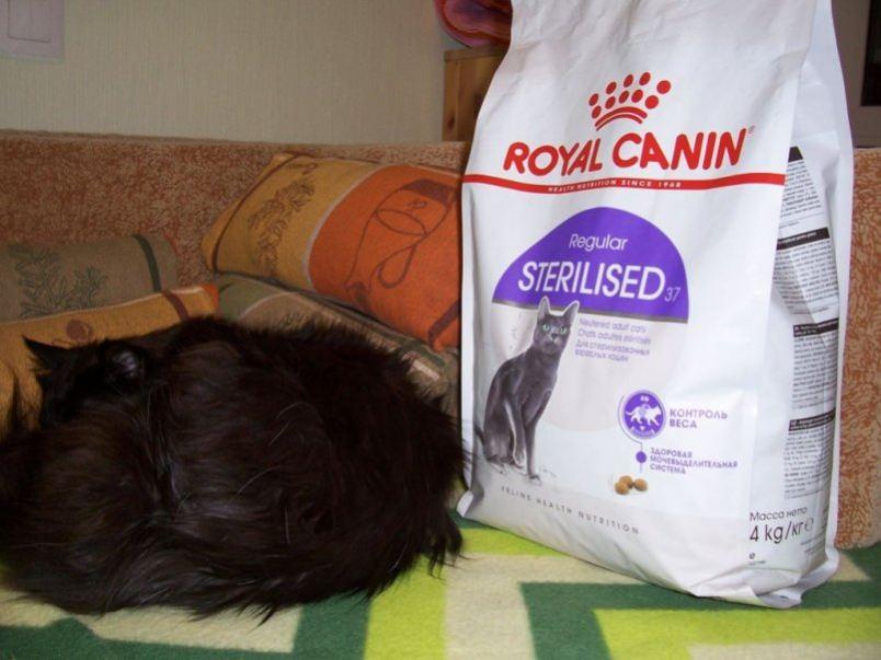 Чем кормить кастрированного кота в домашних условиях