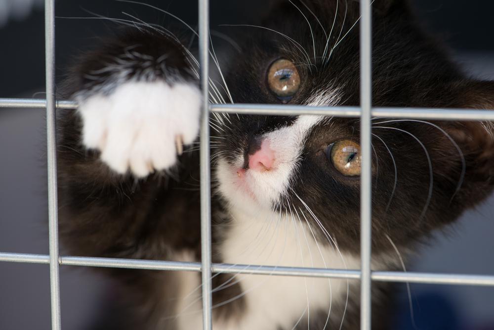 Ищутся добрые руки: куда можно отдать кошку