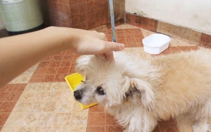 Как приучить щенка к туалету на улице в частном доме