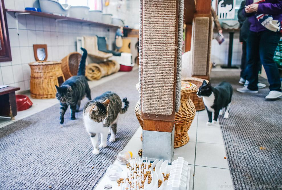 2 кошки проехали 300 миль в кошкомобиле