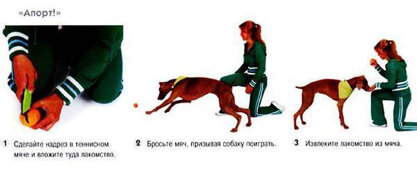 Как научить собаку команде нельзя или фу