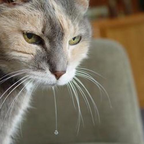 Обильное слюнотечение у кошки: признаки, симптомы, действия владельца