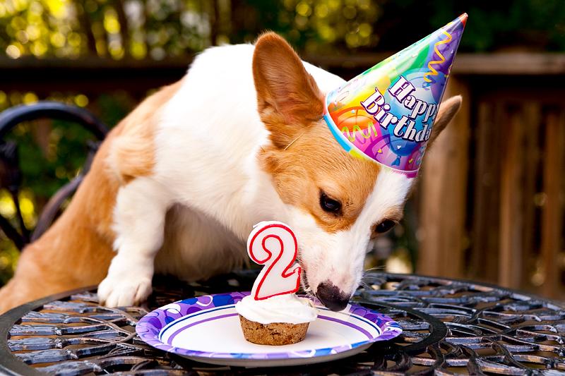 Торт для собаки на день рождения своими руками