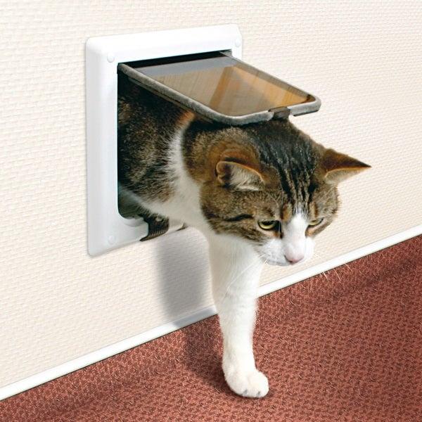 Что такое дверца для кошки и как её сделать