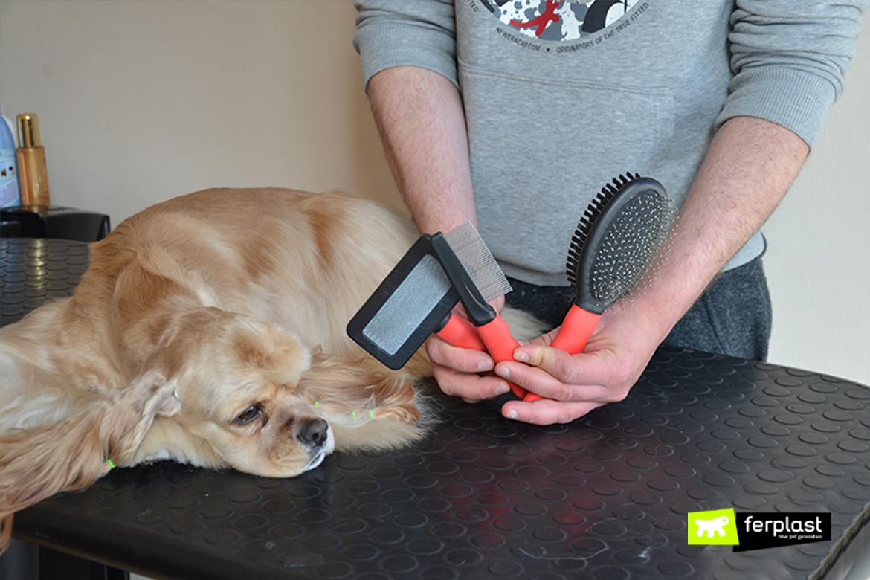 Экспресс линька для собак: как делается в домашних условиях