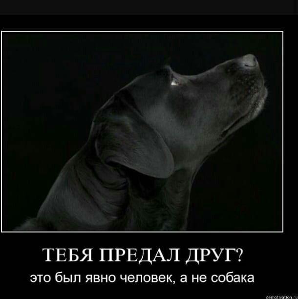 Самый лучший друг: может ли собака забыть хозяина?