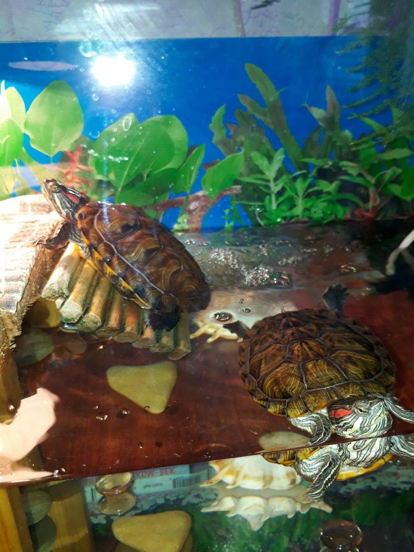 Водные черепахи — виды, описание, уход и места обитания