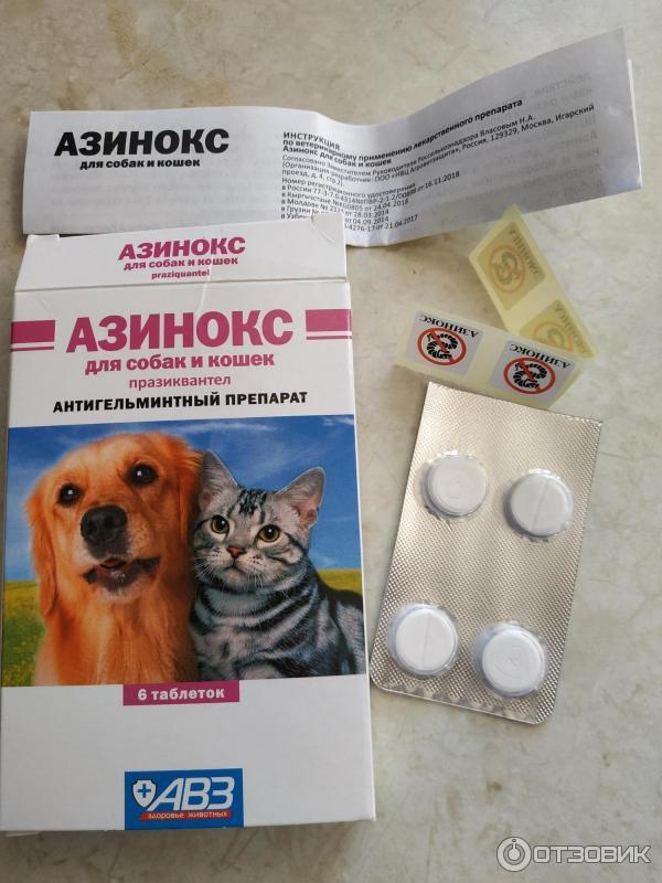 Азинокс для кошек: как бороться с гельминтами