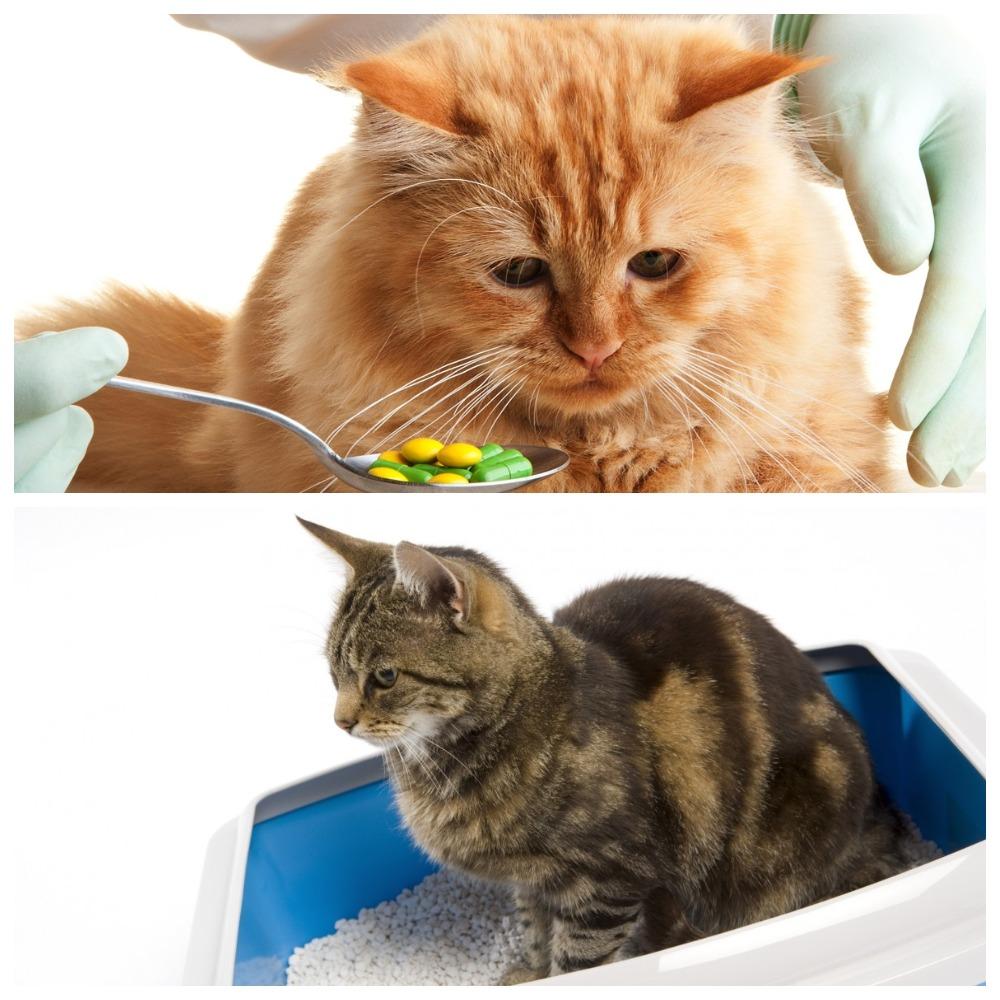 Дюфалак для кошек: дозировка при запоре