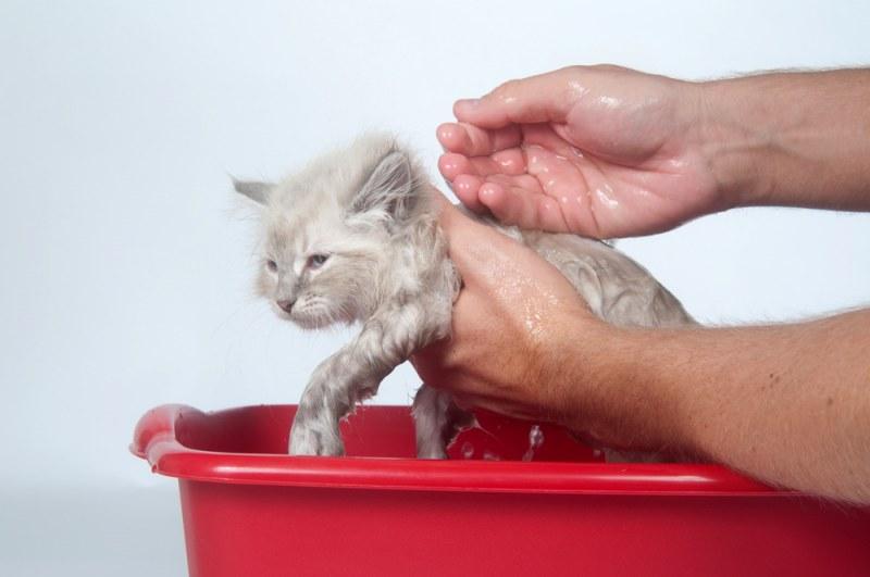Осознанный уход за котёнком и взрослыми кошками