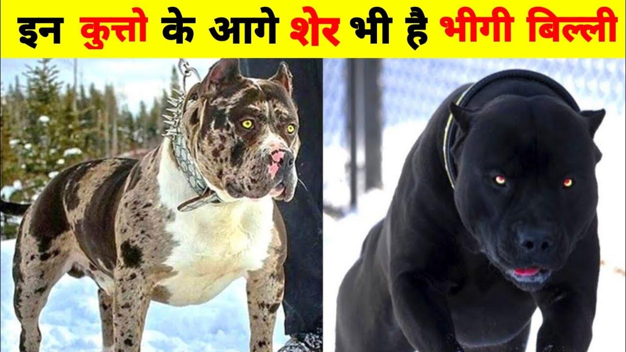 5 самых опасных пород собак