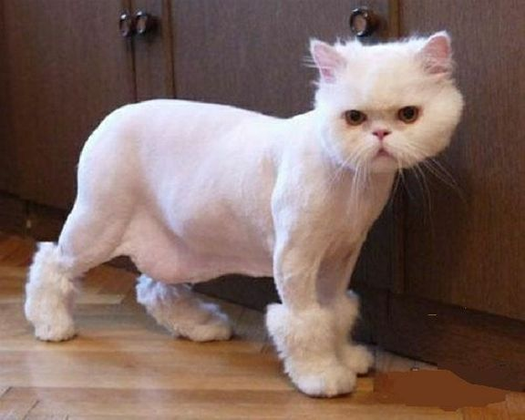 Почему стричь кошек крайне не рекомендуется?