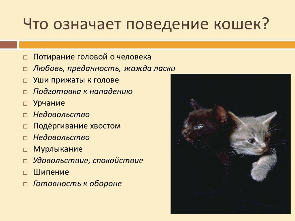 Почему кошки мурлыкают: что это может означать