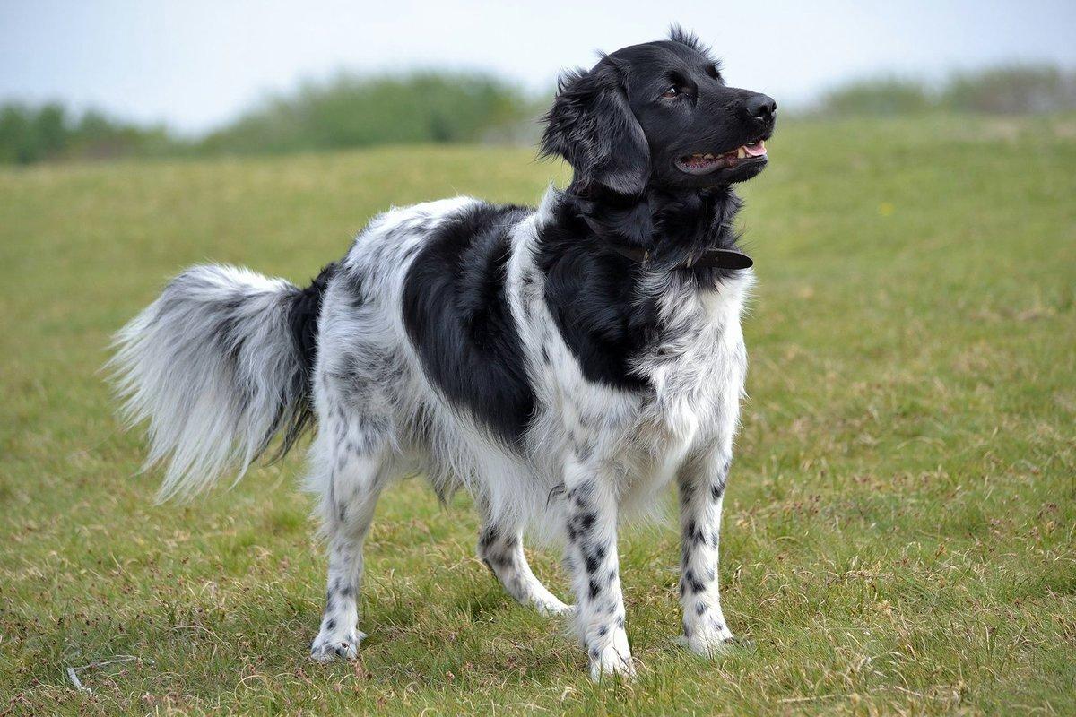 Одна на миллион: топ-10 самых редких в мире пород собак