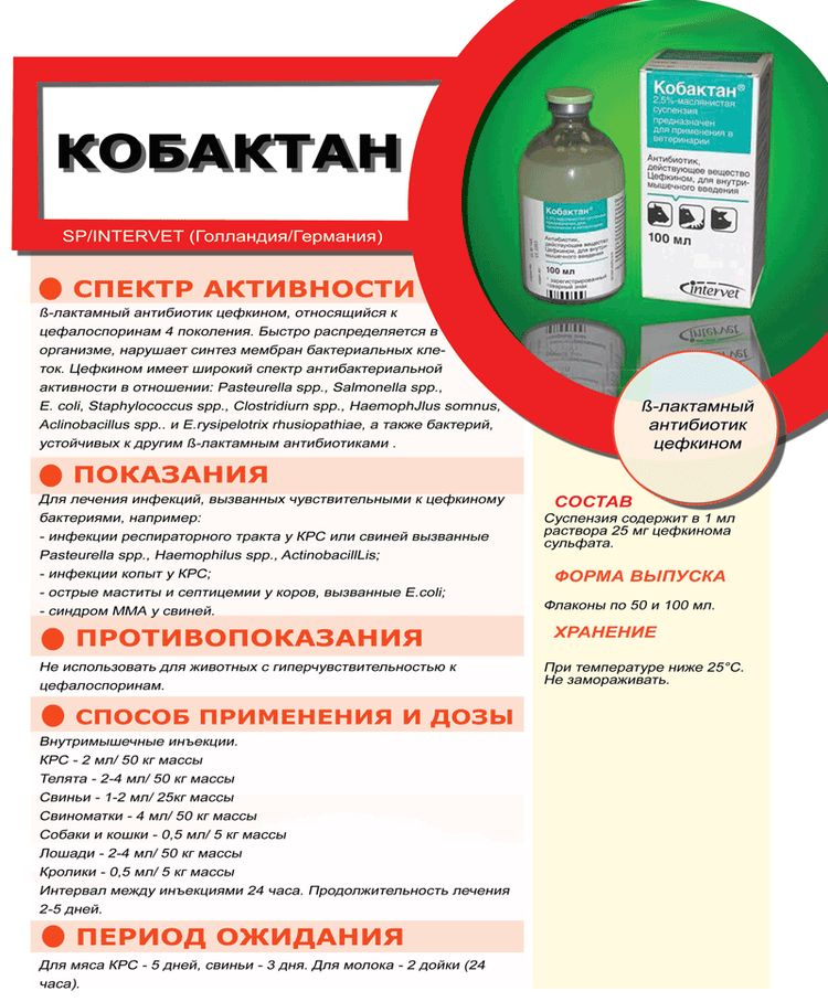 Препарат Кобактан для кошек