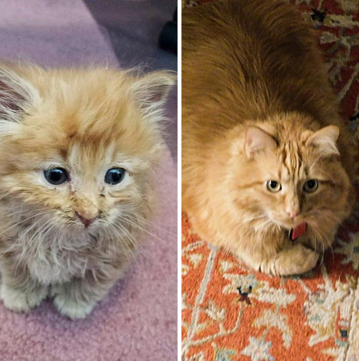 Как меняется внешность котят с взрослением
