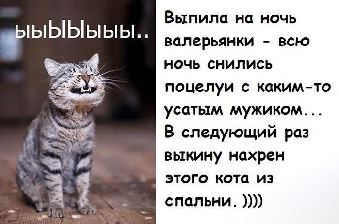 Почему коты любят валерьянку: основные причины симпатии
