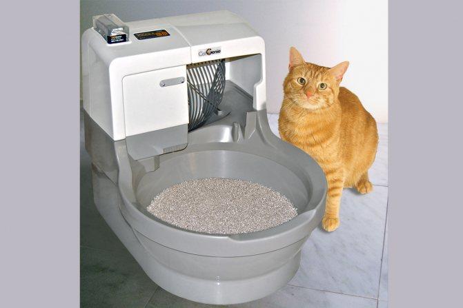 Какой туалет для кошек лучше?