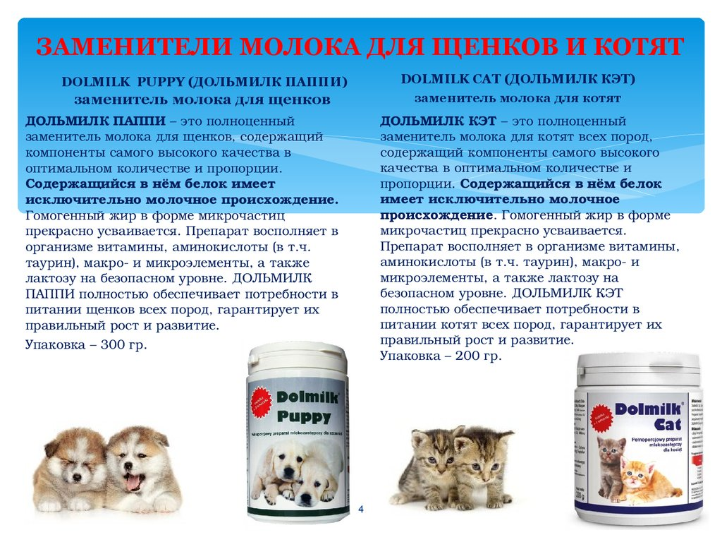 Можно ли собакам молоко: почему нельзя давать